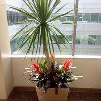 Palm with Bromeliads