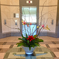 Orchid in Elevator Lobby