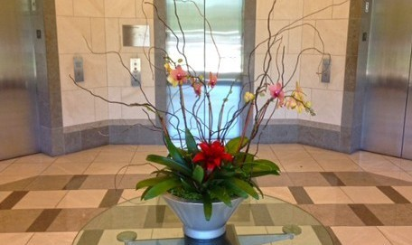 Orchid Bowl in Elevator Lobby